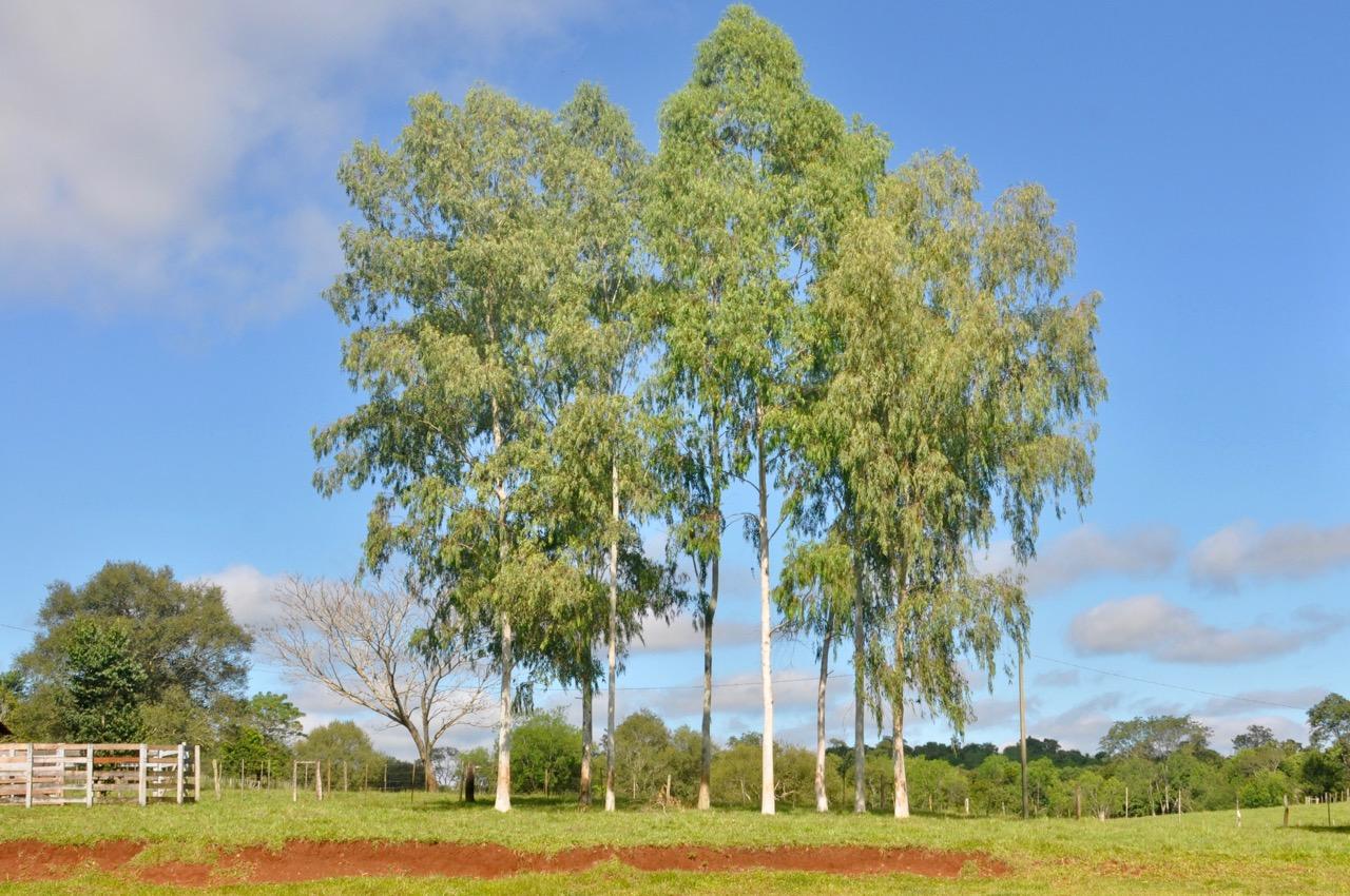 DSC_0582 paraguay - DSC 0582 - Paraguay – Im Land der roten Erde