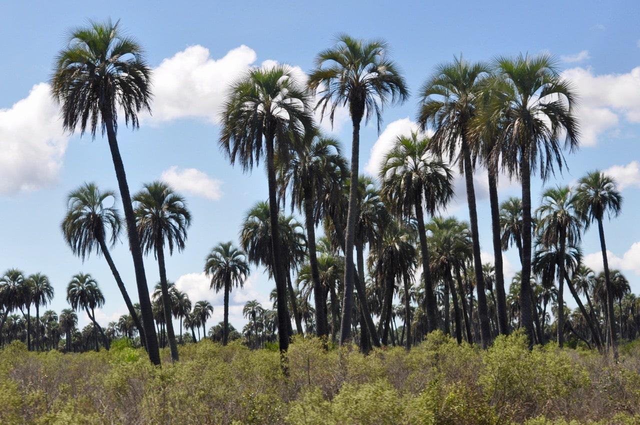 DSC_0978argzweistromland [object object] - DSC 0978argzweistromland - Aus dem Dschungel in den Dschungel – Der Nordosten Argentiniens